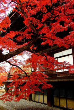 Autumn colors at Shinshōgokuraku-ji temple in Kyoto, Japan