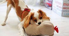 Arriva un cucciolo a casa: come aiutarlo nella fase della socializzazione