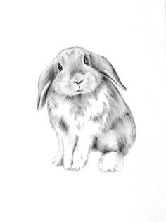 "Bunny Rabbit Art, ORIGINAL Rabbit Charcoal Drawing, Bunny Sketch, Nursery Art - 5""x7"""