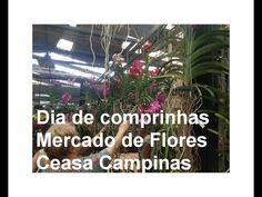 Dia de comprinhas na Ceasa de Campinas - Mercado das Flores