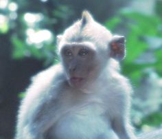 Reposting @darwinismsblog: Monkey Forest - #Ubud #Bali #travel #wanderlust #photography #travelblog #aventure #voyage #objectif