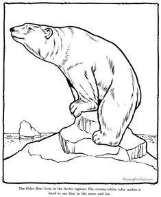 Polar Bear coloring page - Zoo animals
