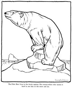 Printable polar bear coloring page Free PDF download at http