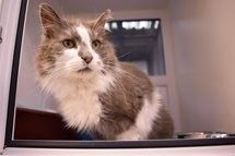 Cats and Kittens at Cheshire rescue centres that need a loving home