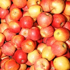 """There is some truth to the saying """"an apple a day keeps the doctor away."""""""