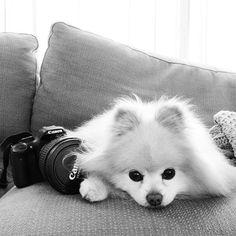 Buddy in black & white