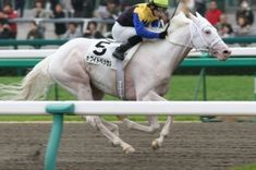 Pinto Thoroughbreds: White Vessel, son of Shirayukihime, another descendent of Shenanigans' son Icecapade.