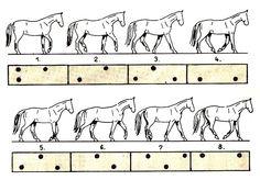 Footfall pattern at walk.