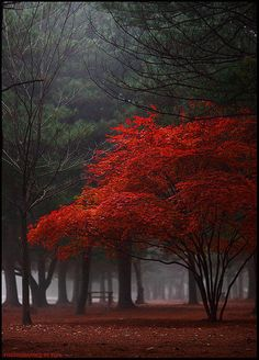 Red tree among the darkness