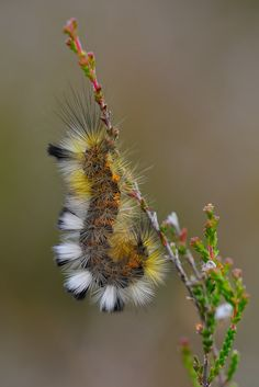 Caterpillar by Michael Wolta