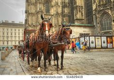stock-photo-vienna-austria-september-horse-drawn-carriage-or-fiaker-popular-tourist-attraction-514829419.jpg (450×318)