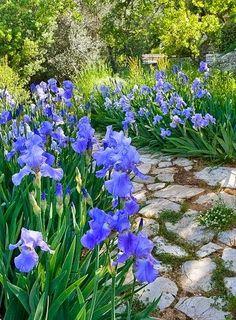 Beautiful Stone Patio and Garden.