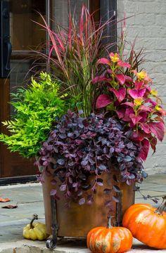 Get ready for Fall containers - Purple Pixie® Loropetalum, 'Lemon Lime' Nandina,, 'Fireworks' Pennisetum, & 'Alabama Sunset' Coleus. Fall Planters, Outdoor Planters, Fall Potted Plants, Autumn Planter Ideas, Front Porch Planters, Concrete Planters, Ceramic Planters, Ceramic Bowls, Planter Pots