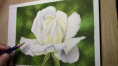 drawing a white rose (inktense pencils)