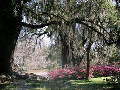 Image from http://www.myneworleans.com/Romance---Shadows1.gif.