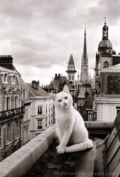 Paris cat #Zbohom A Pis - Tell me a story please - www.bmertus.com