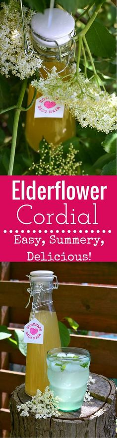 Elderflower Cordial: Forage for elderflowers and make this easy Elderflower Cordial at home. Enjoy the cordial in drinks and treats all summer long!