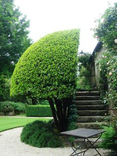 a half tree hides a stairs in a french garden
