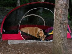 7 Important Tips for Camping With Your Dog, Dog, Cat and other Pet Friendly Travel Articles Sooo cool but I have a little dog and I think something would try to get it at night Camping And Hiking, Family Camping, Tent Camping, Camping Hacks, Campsite, Camping Ideas, Camping Guide, Camping Checklist, Camping Recipes
