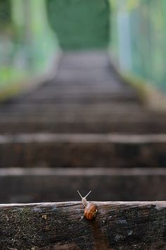 "A lot of Stairs to climb (by Pierpaolo.)  ""O snail Climb Mount Fuji But slowly, slowly!""  — Kobayashi Issa"