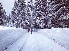 Schneewanderung - Der Reiseblogger Snow, Winter, Outdoor, Cross Country Skiing, Ski Resorts, Tours, Mountains, Winter Time, Outdoors
