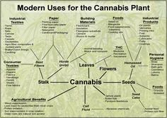 Next time you need some validation about the benefits of hemp, cannabis and marijuana. 420 clothing is nice, but sometimes you need some mental nourishment too. Go be informative you cannabis scholars. Cannabis Plant, Cannabis Oil, Cannabis Edibles, Natural Cancer Cures, Natural Cures, Natural Healing, Medical Marijuana, Urban Gardening, Hemp