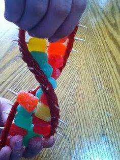 how to make a dna model out of household items