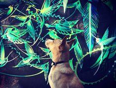 Para você prestar mais atenção nos muros de SP, esse cachorro vira-lata adotado simpático traz muita arte de rua no Instagram! Conheça Cido e a Cidade!