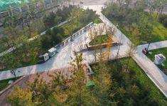唐山市站西片区核心区京唐大道中央绿轴景观设计 / 北京正和恒基滨水生态环境治理股份有限公司 - 谷德设计网 Urban Landscape, Landscape Design, Tree Grate, Plaza Design, Outdoor Office, Leaf Images, Deciduous Trees, Growing Tree, Begonia