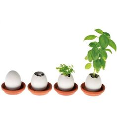 Posh Totty Designs Interiors 'Eggling' Grow Your Own Plant Kit (€11) ❤ liked on Polyvore featuring filler