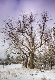 ✯ The Barren Tree