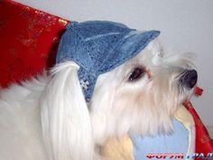 Кепка для собаки своими руками - Одеваем домашнего питомца любимого – самого забавного и неутомимого - Форум-Град