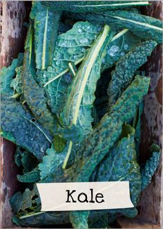 Want to learn more about kale? Sign up for Jamie Oliver's Kitchen Garden Project at http://www.jamieskitchengarden.org/!
