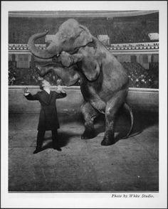 Houdini Vanishes an Elephant