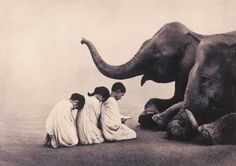 Amardeep Singh: Ashes & Snow: A Traveling Circus  Gregory Colbert photographer