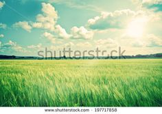 Countryside landscape with crops and sunshine - stock photo