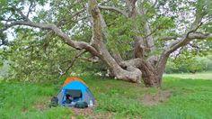Camping, Big Sur, California