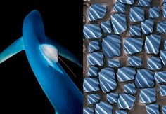 PhiloBioDesign: Biomimicry for Improved Design