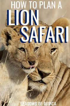 How to Plan The Ultimate Lion Safari - Travel to Africa