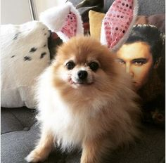 24 adorable pets that are ready for Easter
