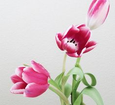 Flowers share the beauty of simplicity.