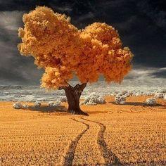 (60) Twitter Infrared Photography, Landscape Photography, Nature Photography, Dslr Photography, Pretty Pictures, Cool Photos, Amazing Photos, Nature Landscape, Nature Nature