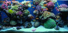 Vibrant reef tank. 75 Gallon Aquarium, Saltwater Aquarium Fish, Saltwater Tank, Reef Aquarium, Freshwater Aquarium, Colorful Fish, Tropical Fish, Salt And Water, Fresh Water