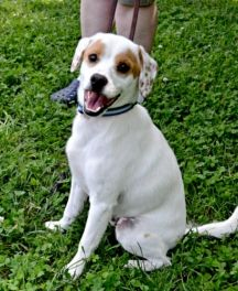 Bandit-  This handsome boy is looking for fun, excitement, and unconditional love. Could you be the home for this handsome guy?  Click on Bandit's picture for more information.