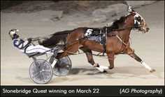 Stonebridge Quest Romps In Preferred Standardbred Horse, Harness Racing, Westerns, Trotter, Horses, Beautiful Things, Wednesday, March, Photography