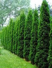 Die 35 Besten Bilder Von Hecke Gardens Backyard Patio Und Landscaping