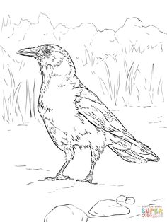 American Crow Coloring Page Realistic