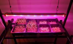 We just got our lighting unit and have started our internal testing. We have observed that microgreen growing can be done with relatively low levels of growing lights. We have also found that the...
