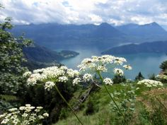 From Geneva, I was back on the train for the final leg of my European adventure: meeting up with my German friend Melli for some hiking near Lucerne! Melli and I first met when we were randomly flatmates while both living in Prague back in 2009. We've been good friends ever since – she evenContinue Reading …