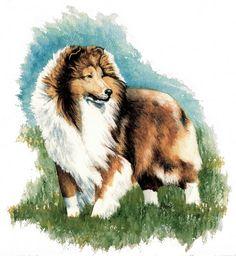 Sheltie Watch Shetland Sheepdog Kathleen Sepulveda | Kathleen Sepulveda